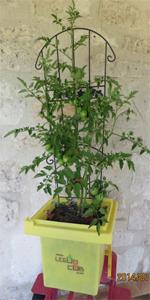 acheter tomate legumcub sur legum cub vente mat riel jardinage et accessoires. Black Bedroom Furniture Sets. Home Design Ideas